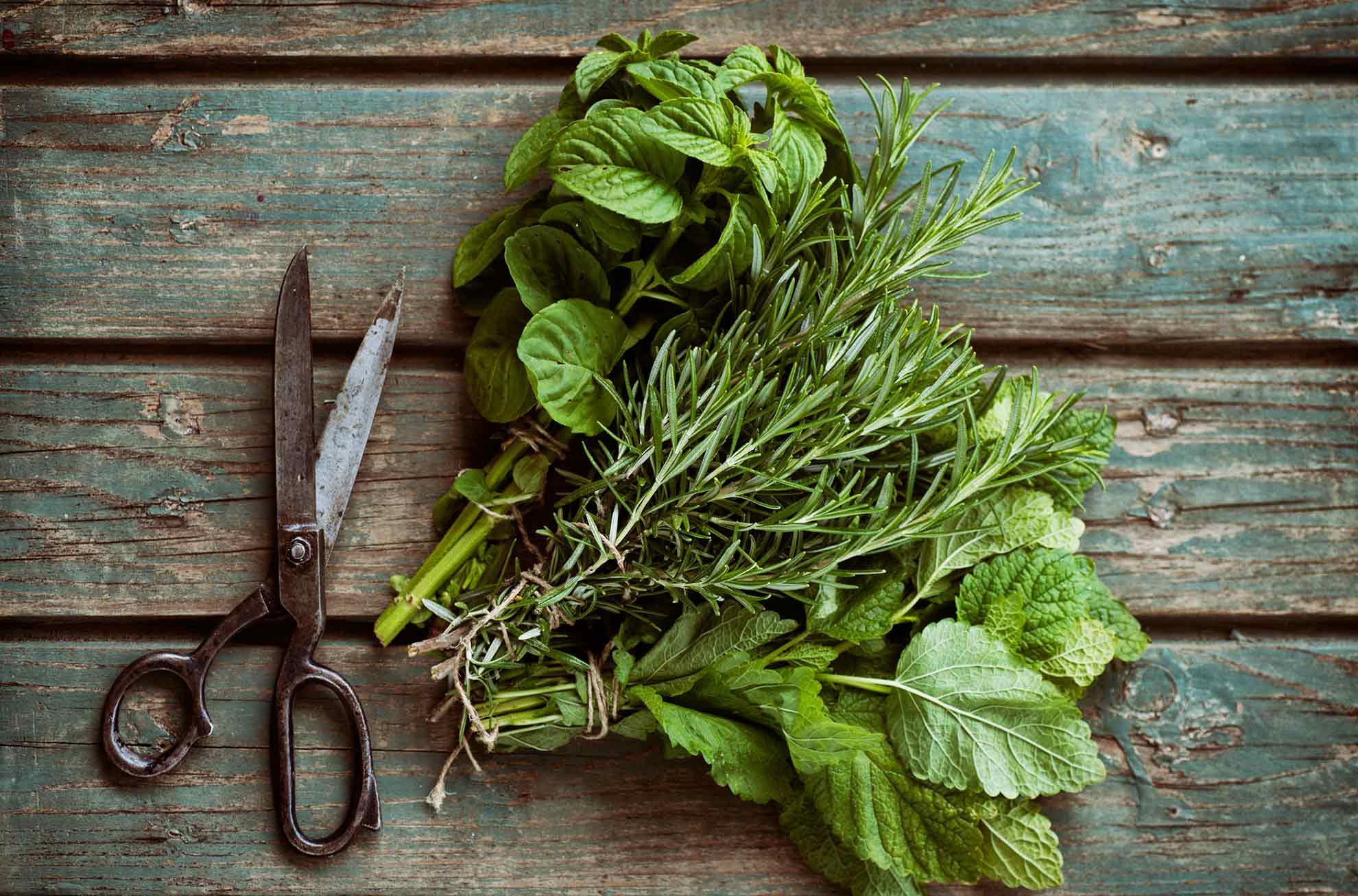 how-to-create-a-herb-garden-2