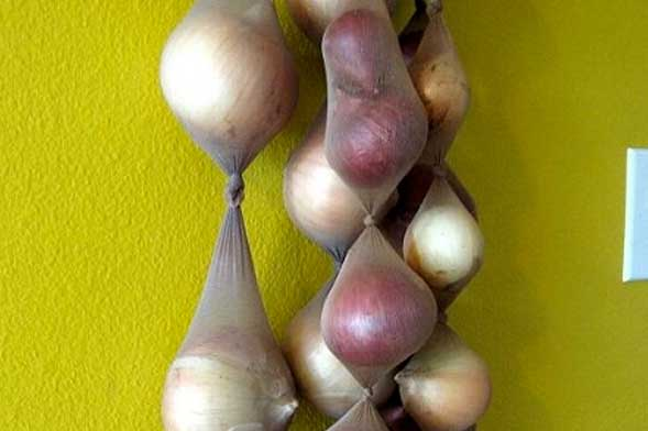onions stocking